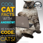 Test Your Cat Knowledge With MINDs Code N Cat Whiz Andrew Gehman