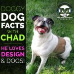 Test Your Dog Knowledge With MIND's Chad McComsey