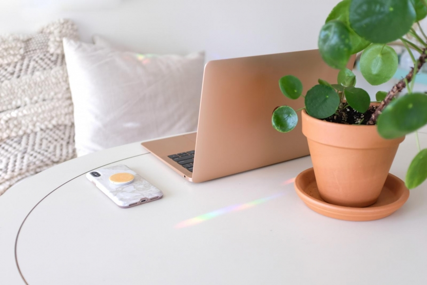 laptop and plant on a table
